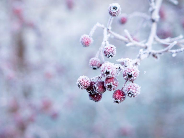 Frostiges Winterwochenende am Bodensee 2022