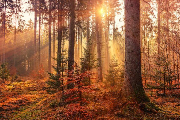 Goldener Herbst am Bodensee 2020